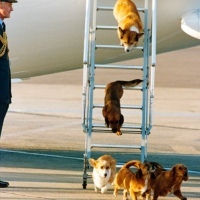 The Queen's corgis